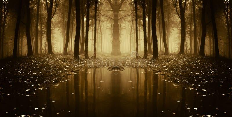 Symmetrische foto van een meer in een donker bos met mist stock afbeeldingen