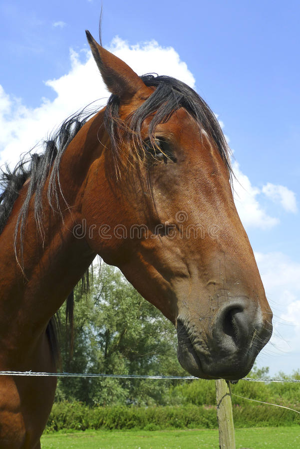 Sympathetic Horse Leaning Over A Fence Stock Image