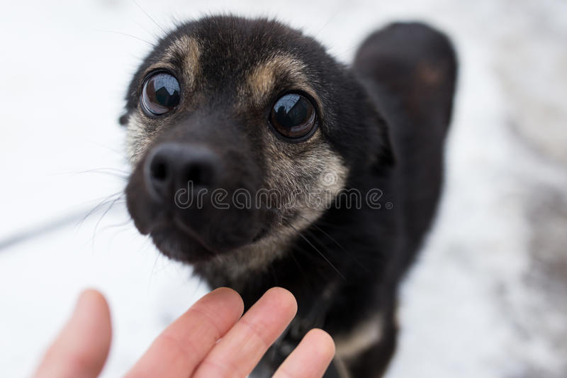 Download Sympathetic look small dog stock image. Image of animal - 83719731