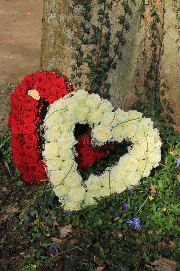 Download Sympathieblumen Nahe Einem Baum Stockfoto - Bild von beerdigung, sympathie: 90232716