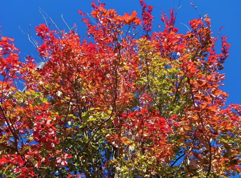 Symphonie von Farben im Fall stockfotos