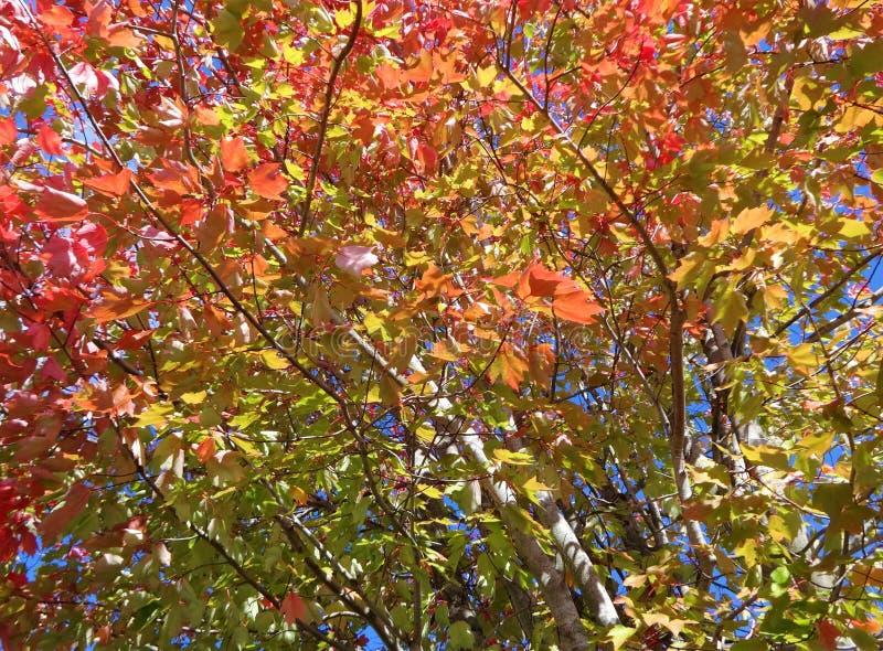 Symphonie von Farben im Fall lizenzfreie stockfotos