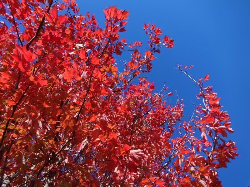 Symphonie von Farben im Fall stockfoto
