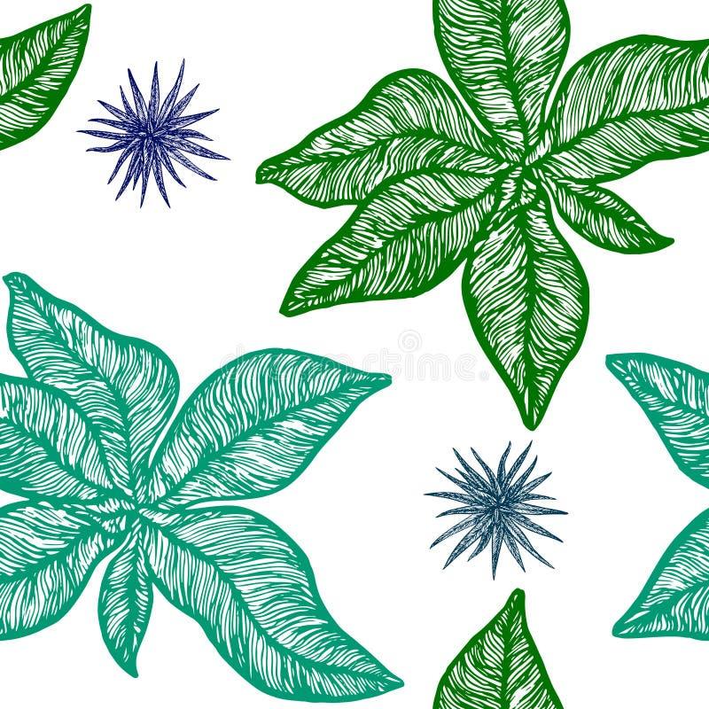 Symphytum officinale i chlorophytum roślina ilustracja wektor