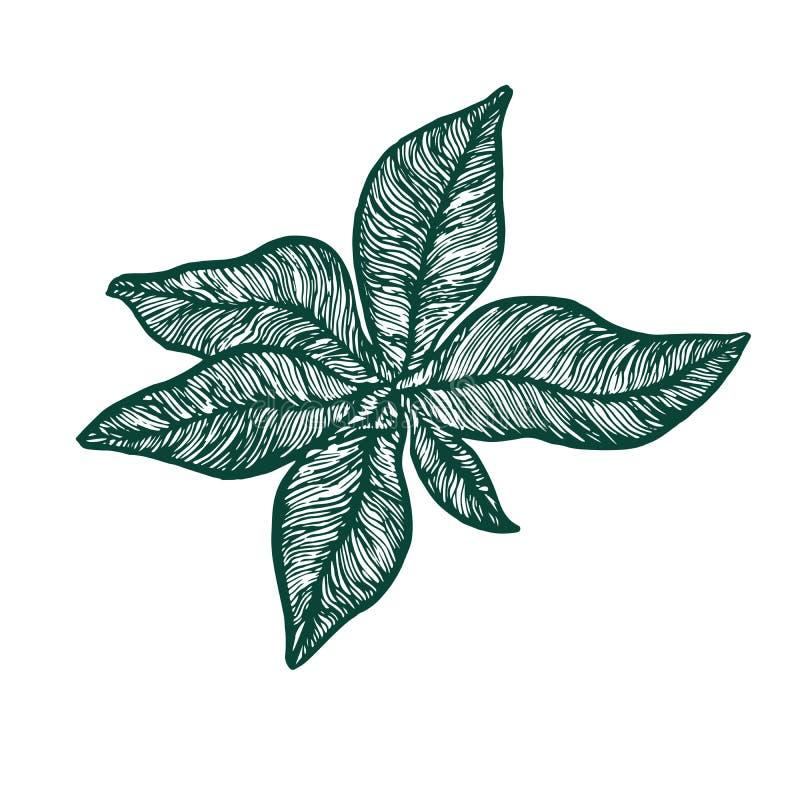 Symphytum officinale roślina najpierw opuszcza, woodcut stylu projekt, ręka rysujący doodle, nakreślenie w wystrzał sztuki stylu ilustracja wektor