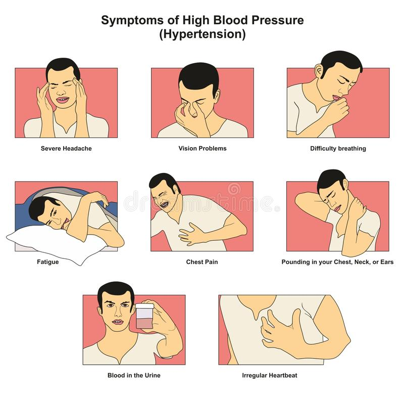 Symptoms of High Blood Pressure hypertension. Infographic diagram signs risks including fatigue headache vision problem chest pain difficulty breathing vector illustration