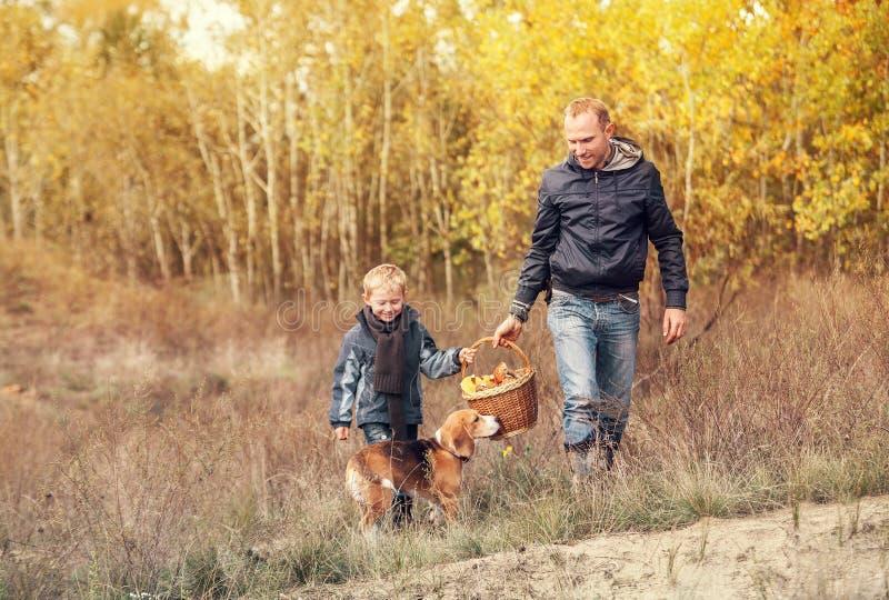 Syn z ojcem niesie pełnego kosz pieczarki w jesień lesie zdjęcie stock