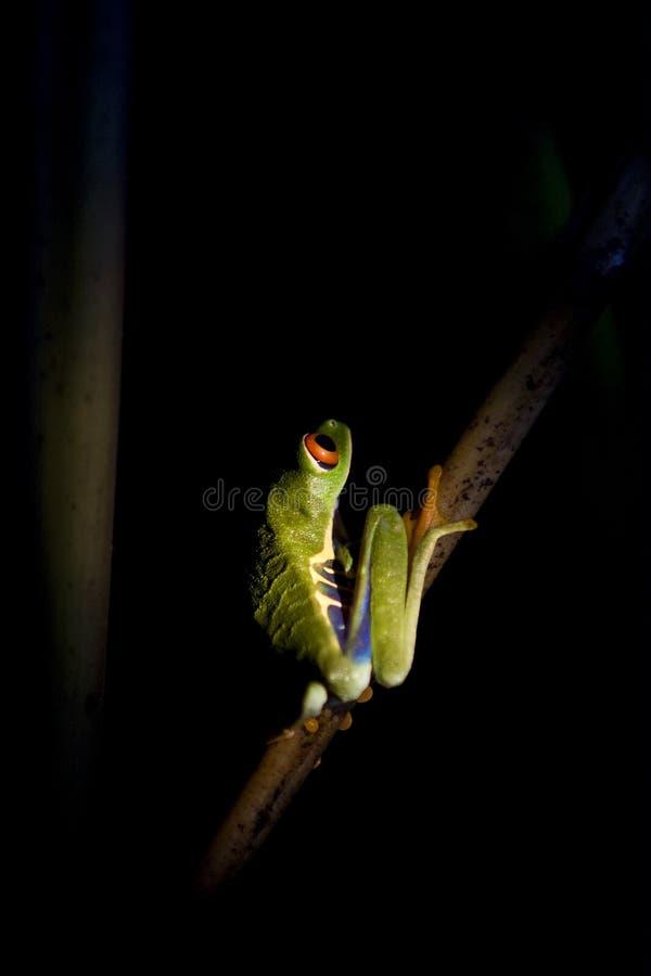 synad grodaredtree arkivfoton