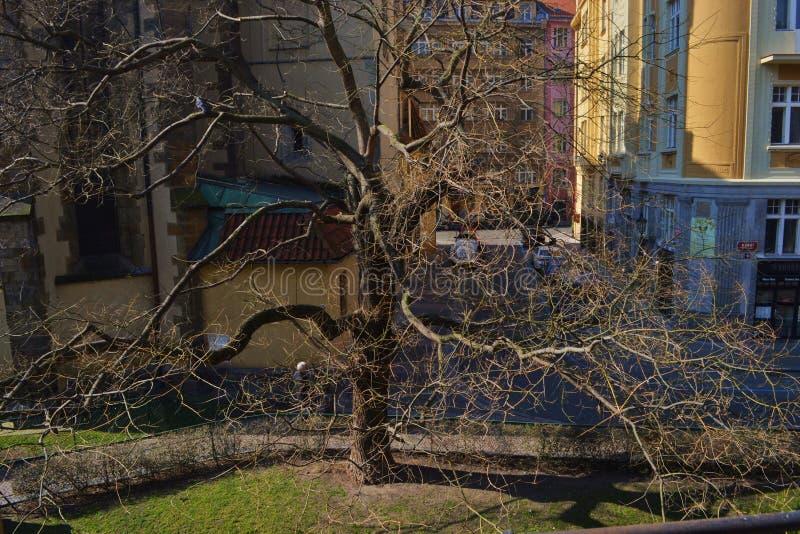 Synagogue espagnole à Prague photos libres de droits