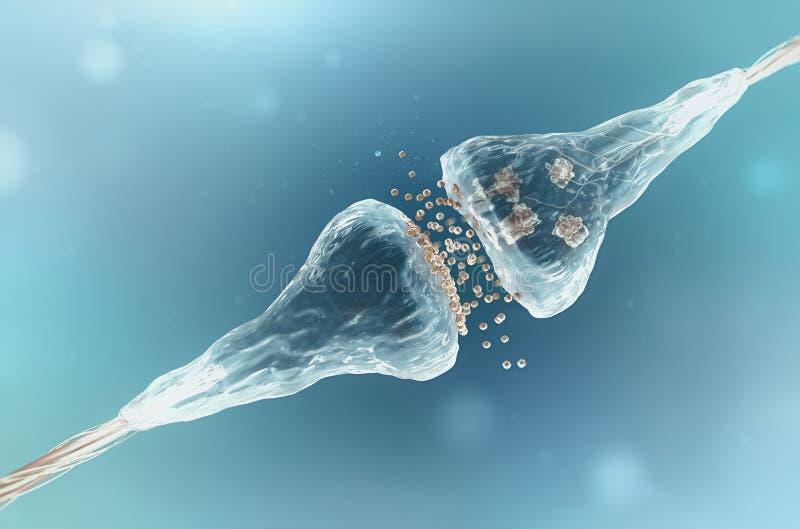 Synaps en Neuron stock fotografie