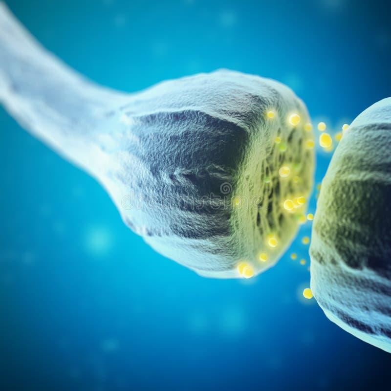 Synaps en Neuronencellen die elektro chemische signalen verzenden het 3d teruggeven vector illustratie