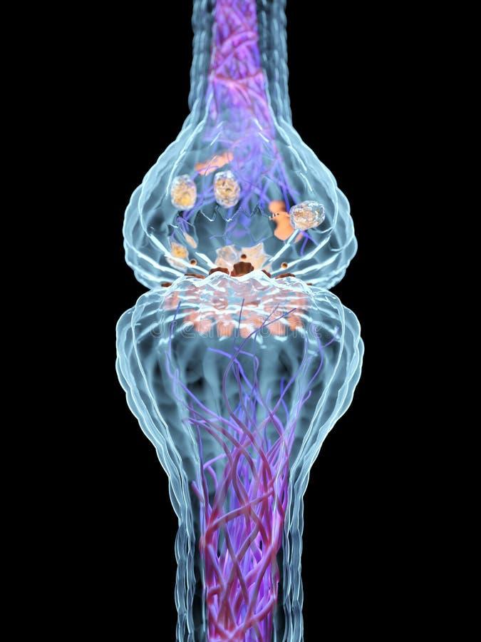 Synapseanatomin royaltyfri illustrationer
