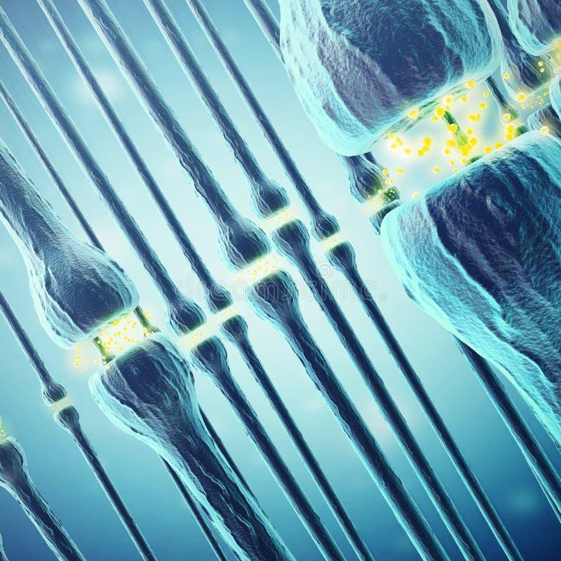 Synaptic przekaz, ludzki układ nerwowy świadczenia 3 d ilustracja wektor