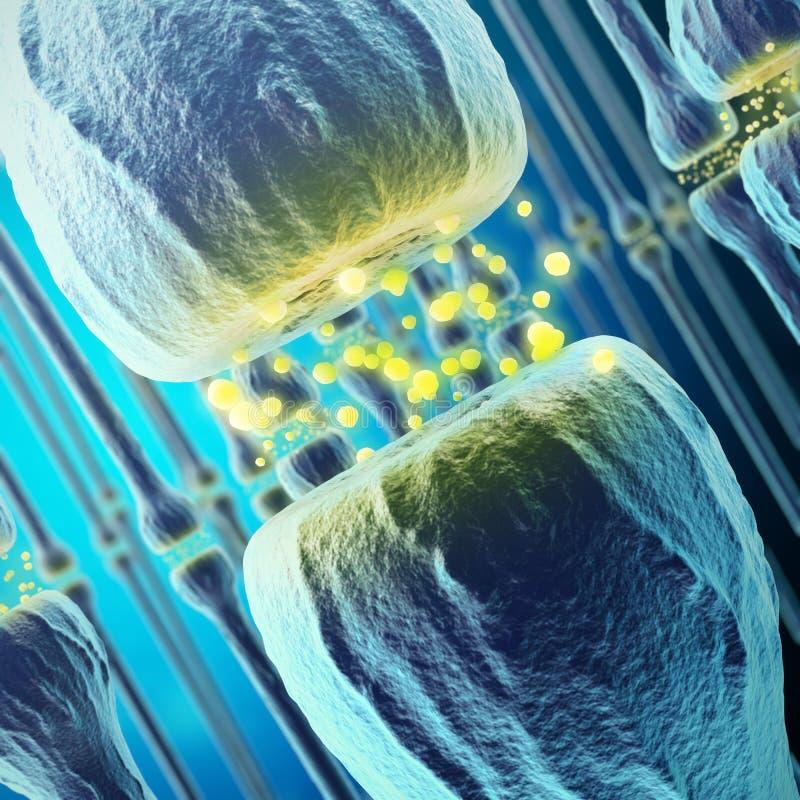 Synaptic transmission, human nervous system. 3d rendering stock illustration
