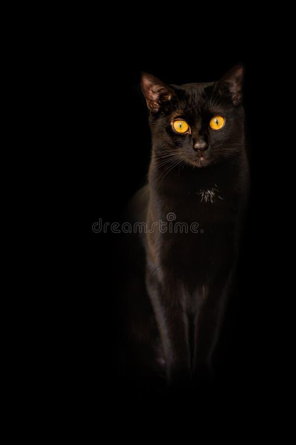 Synar flamman för guling för den svarta katten för bakgrund på svart bakgrund arkivfoto