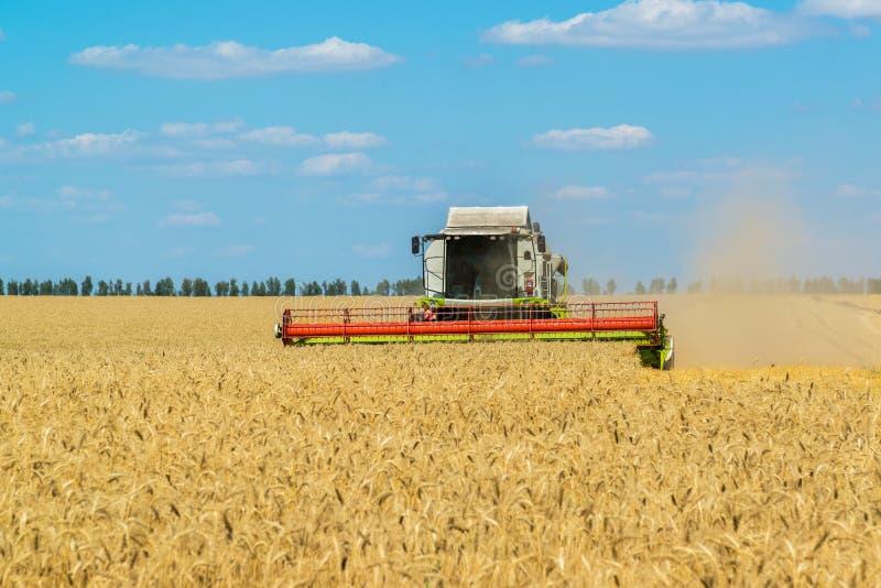 syndykat zbiera zbożowego żniwo w polu, Rosja fotografia stock