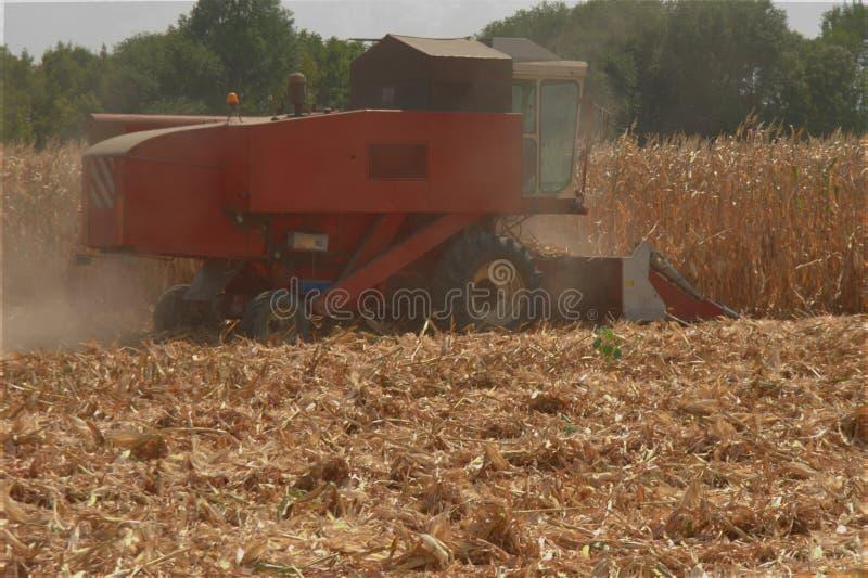 Syndykata żniwiarz zbiera kukurudzy obrazy stock