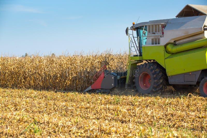 Syndykata żniwiarz zbiera kukurydzane kukurydz adra obraz stock