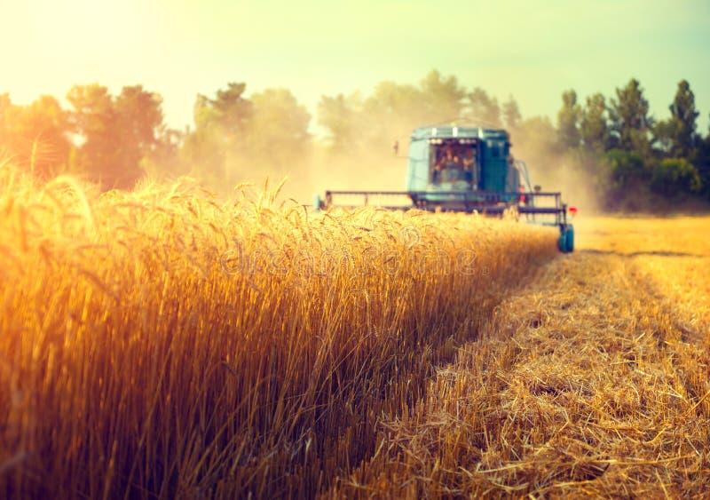 Syndykata żniwiarz zbiera pszenicznego pole obraz royalty free