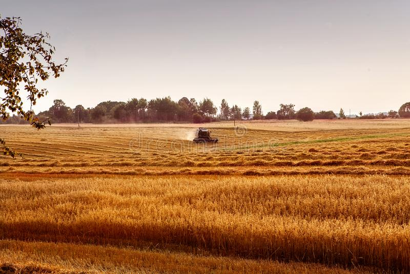Syndykata żniwiarza rolnictwa maszyna zbiera złotego dojrzałego whe zdjęcia stock