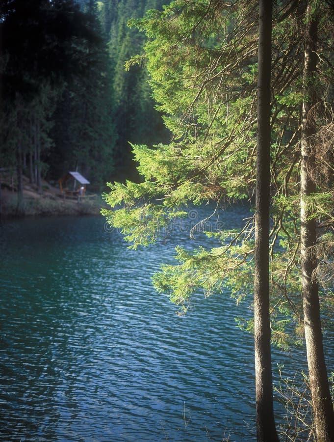 Download Synevir lake. stock photo. Image of ukraine, tree, scene - 31800742