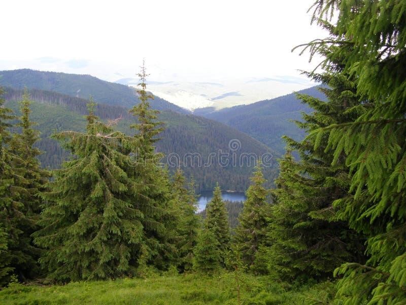 Synevyr - lac en montagnes carpathiennes images stock