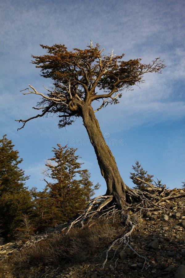 Synliga Root royaltyfri foto