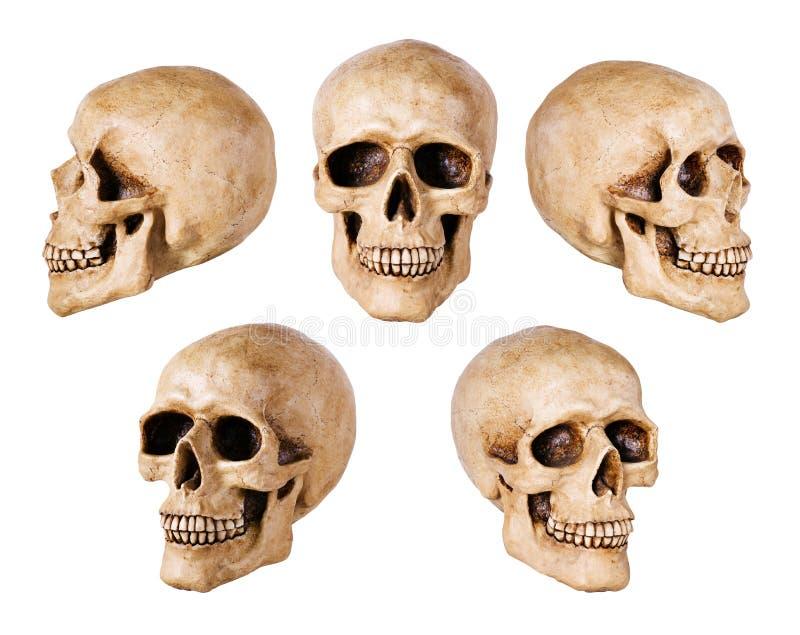 syntetisk skalle arkivbild