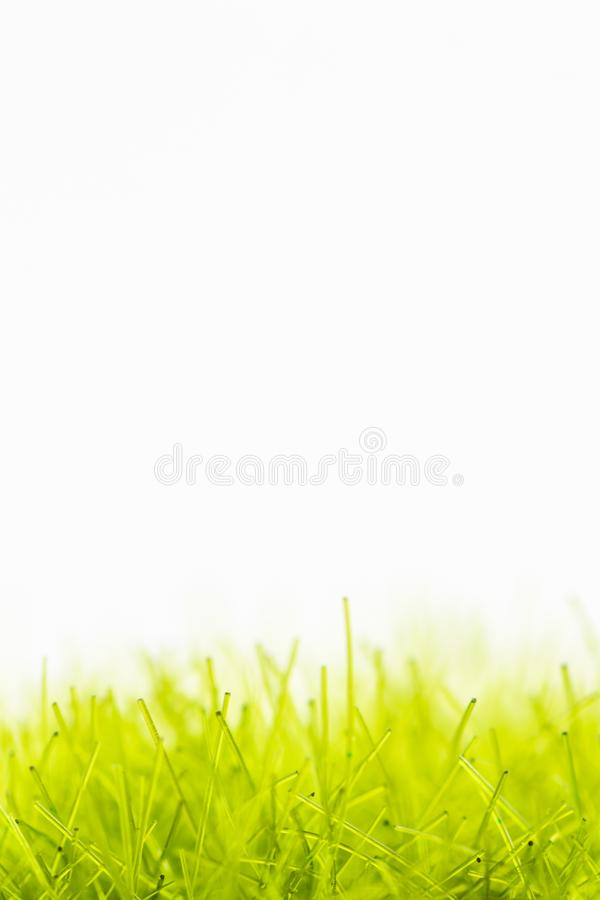 Synthetic green fibers resembling artificial turf with white background. stock images