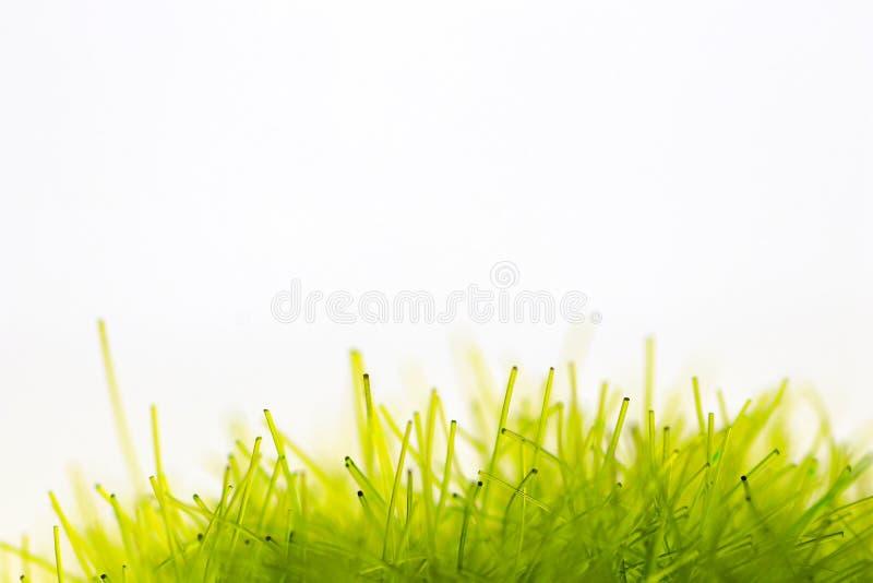 Synthetische groene vezels die op kunstmatig gras met witte achtergrond lijken royalty-vrije stock foto