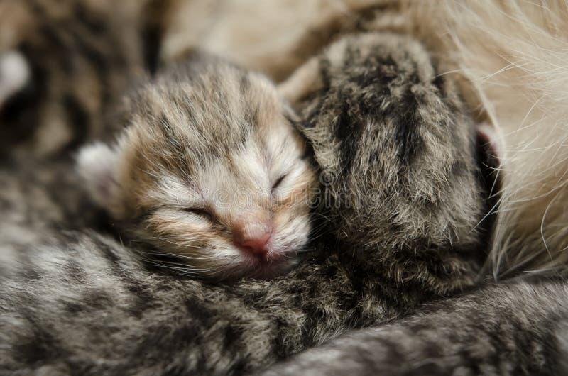Sypialna dziecko figlarka zdjęcie stock