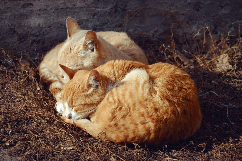 Sypialni koty zdjęcia royalty free