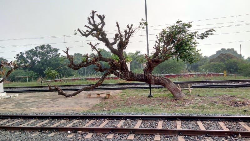 Sypialny drzewo zdjęcie stock