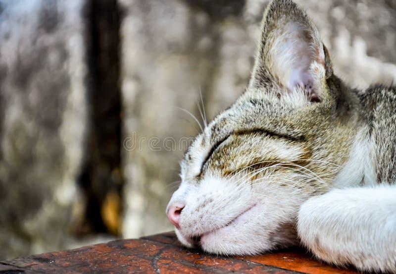 Download Sypialny kot obraz stock. Obraz złożonej z zabranie - 106912461