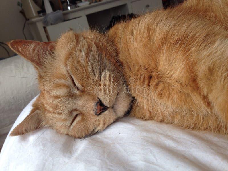 Sypialny kot zdjęcie stock
