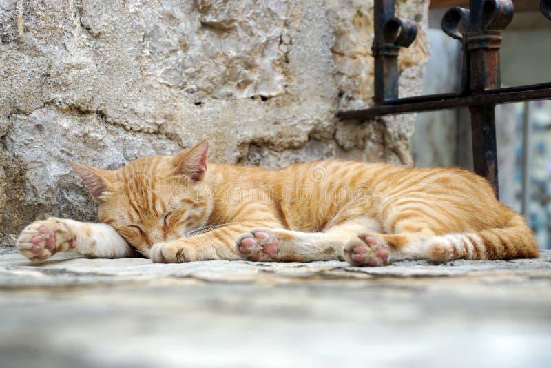 Sypialny kota lying on the beach na kroku w świątyni zdjęcia stock
