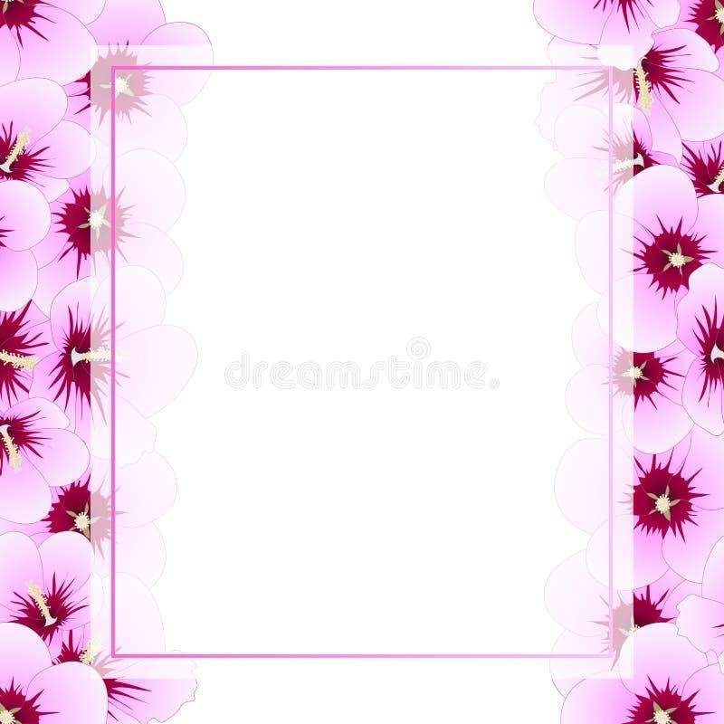 Syriacus do hibiscus - Rosa de Sharon Banner Card Border Ilustração do vetor ilustração stock