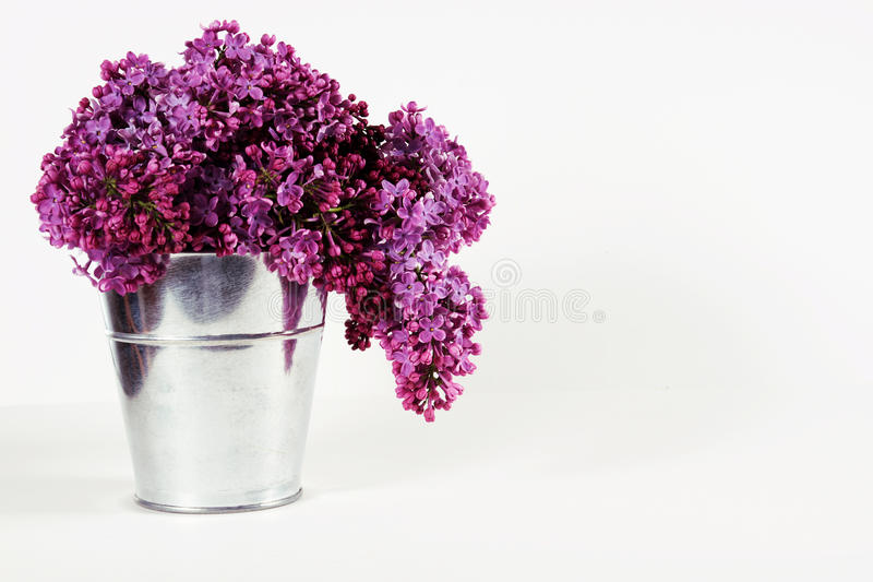 Syringa vulgaris photo stock