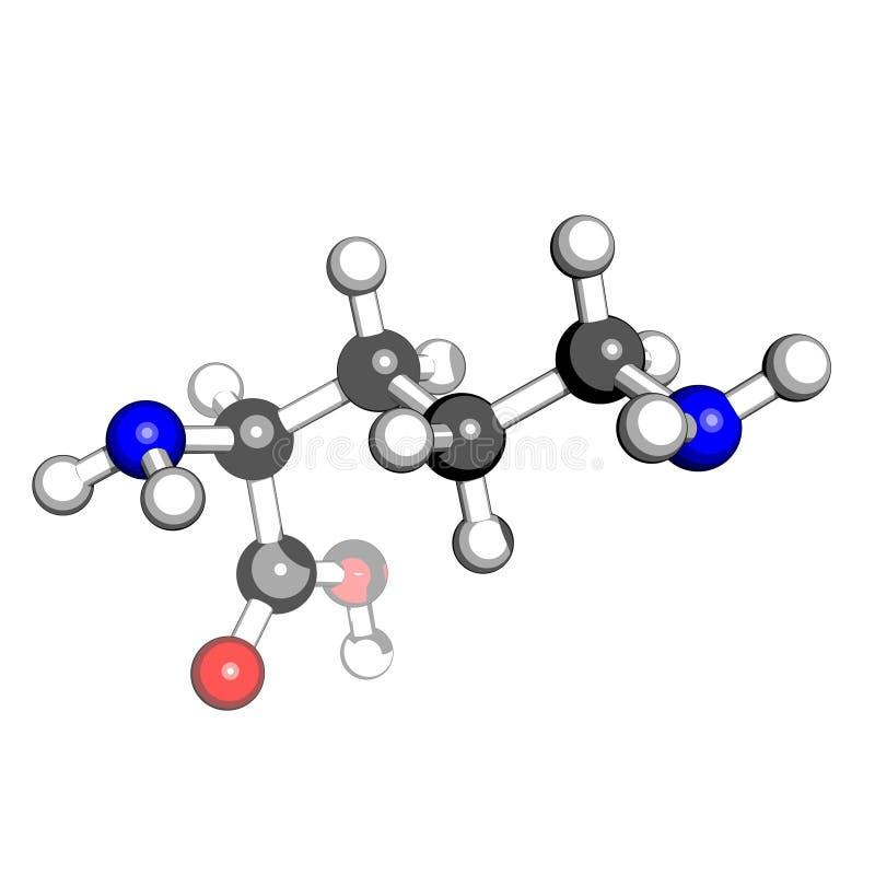 syrlig amino ornithinestruktur vektor illustrationer