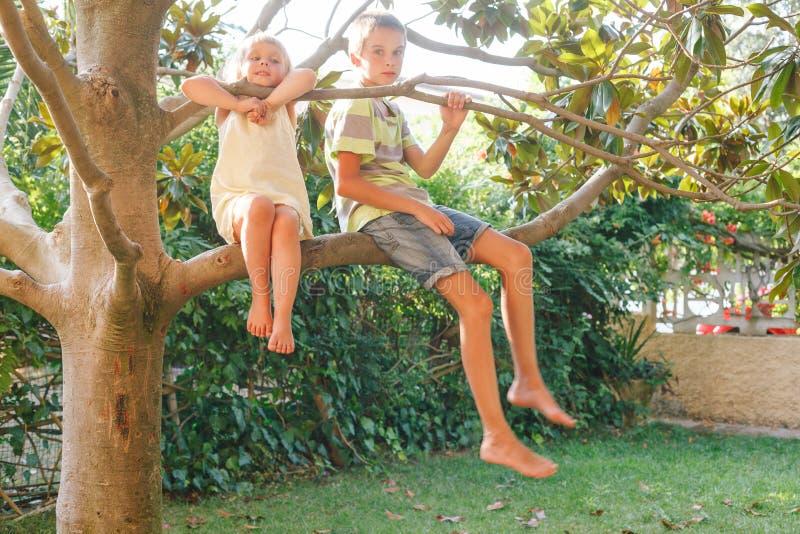 Syskon som sitter p? ett tr?d i en sommartr?dg?rd arkivbilder