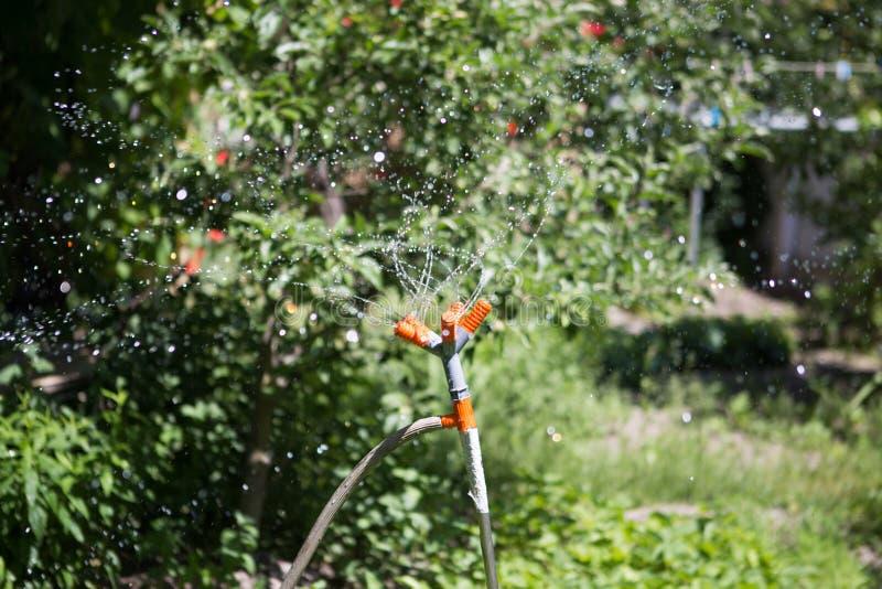 Système d'arrosage automatique, arrosant la pelouse dans la perspective de l'herbe verte Plan rapproché photos libres de droits