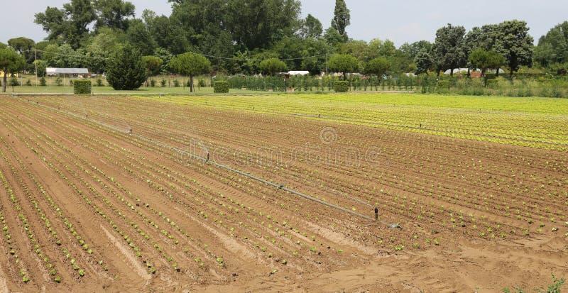 Système d'irrigation automatique pour arroser les champs photo libre de droits