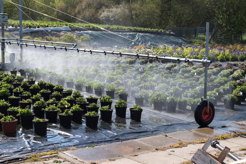 Système d'irrigation utilisé pour arroser les usines mises en pot dans la sortie photo libre de droits