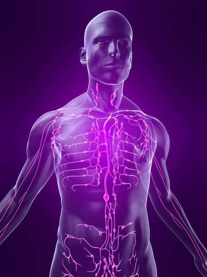 Système lymphatique illustration de vecteur