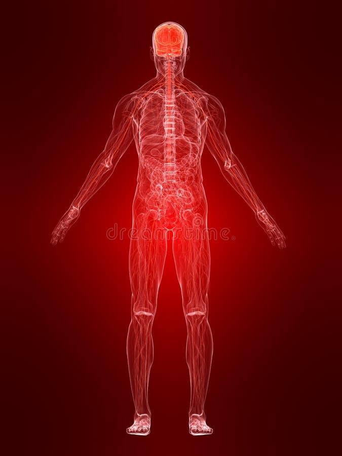 Système nerveux mis en valeur illustration de vecteur