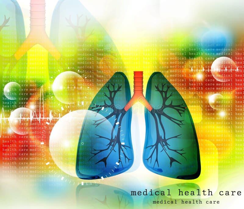 Système pulmonaire de poumons humains illustration libre de droits