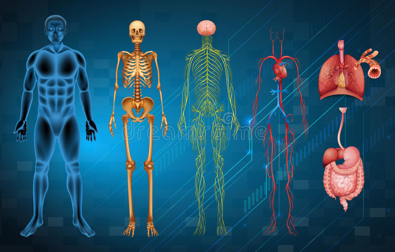 Systèmes de corps humain illustration stock