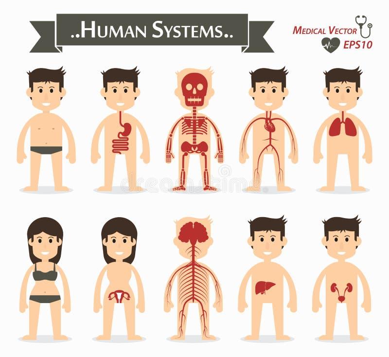 Systèmes humains illustration de vecteur