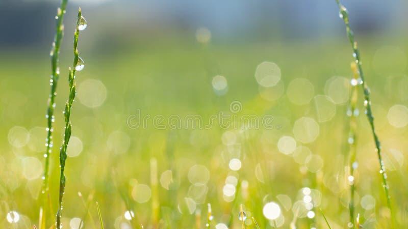 Syst?me d'arrosage automatique arrosant la pelouse sur un fond d'herbe verte images libres de droits