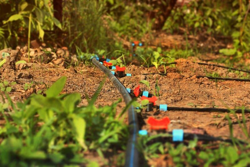Syst?me d'irrigation par ?gouttement Circuit de refroidissement dans le jardin photographie stock
